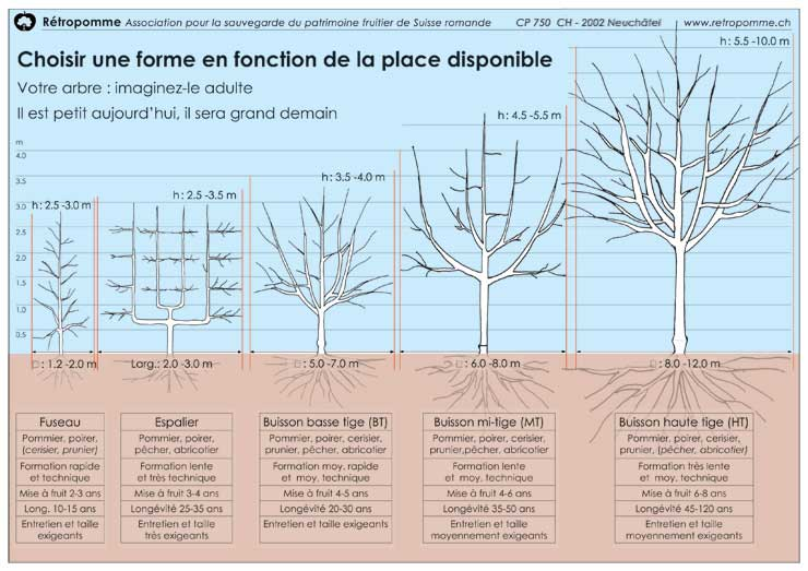 Taille arbre fruitier - Calendrier taille arbres fruitiers ...